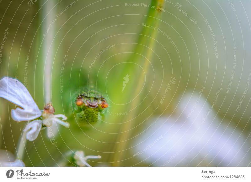 Rücklichter Natur Landschaft Pflanze Tier Blume Gras Sträucher Garten Park Wiese Feld Wald Flügel 1 springen Steppengrashüpfer Heuschrecke Insekt Farbfoto