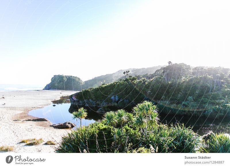 awakeness. Pflanze Sommer Sonne Meer Küste hell Bucht Wolkenloser Himmel exotisch Palme Sandstrand Wildnis Oase Neuseeland Pazifik Südinsel