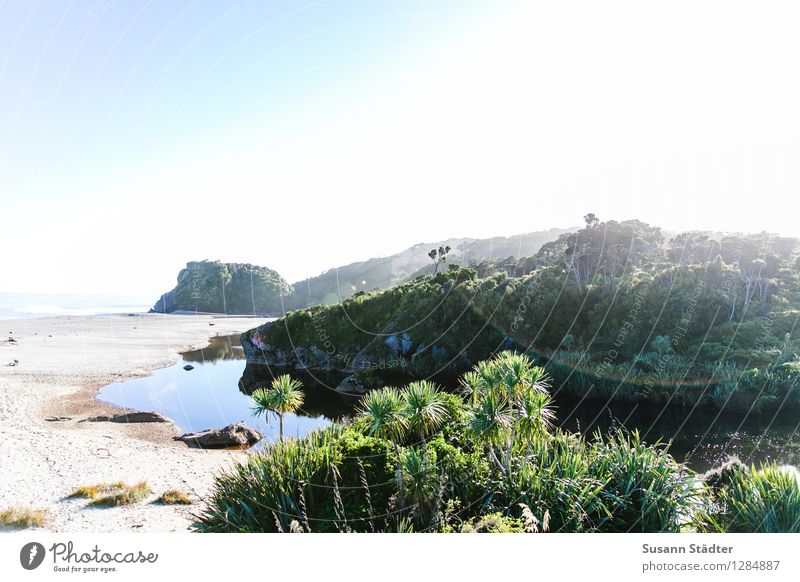 awakeness. Wolkenloser Himmel Sonne Sommer Pflanze exotisch Küste Meer hell Wildnis Palme Neuseeland Südinsel Bucht Gegenlicht Sandstrand Pazifik Oase Farbfoto