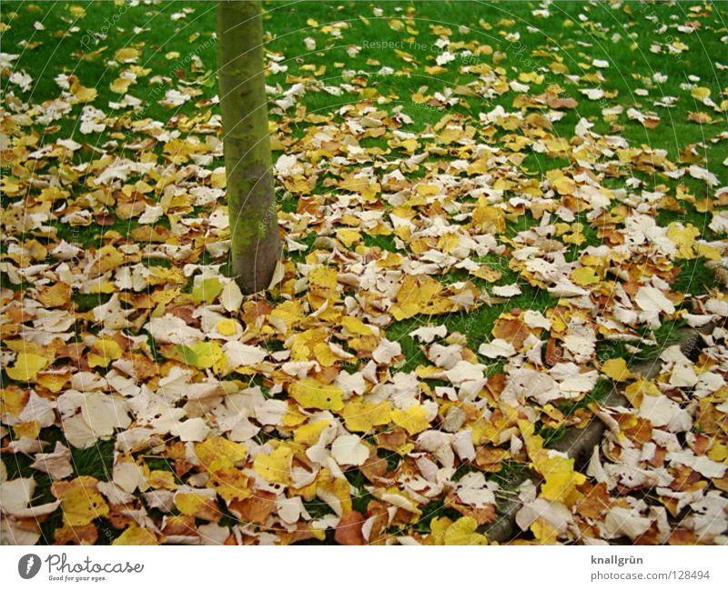 Letzten Herbst Baum grün Blatt gelb Wiese Gras braun Vergänglichkeit Baumstamm