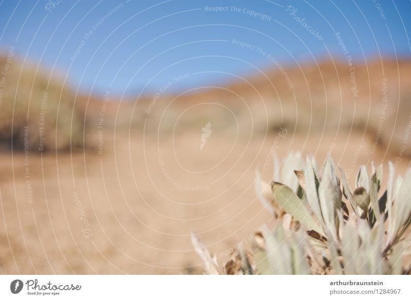 Wüstenlandschaft Kanaren Himmel Natur Ferien & Urlaub & Reisen Pflanze schön Sommer Sonne Landschaft Tier Ferne Umwelt Wärme Sand Freizeit & Hobby Tourismus