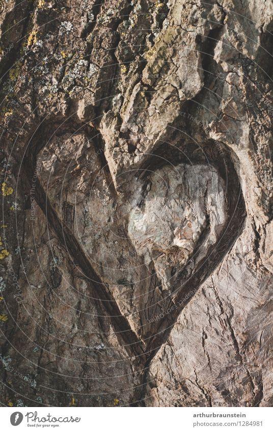 Herz am Baum Freizeit & Hobby Dekoration & Verzierung Valentinstag Partner Umwelt Natur Frühling Wald Holz Zeichen Liebe natürlich braun grau Lebensfreude