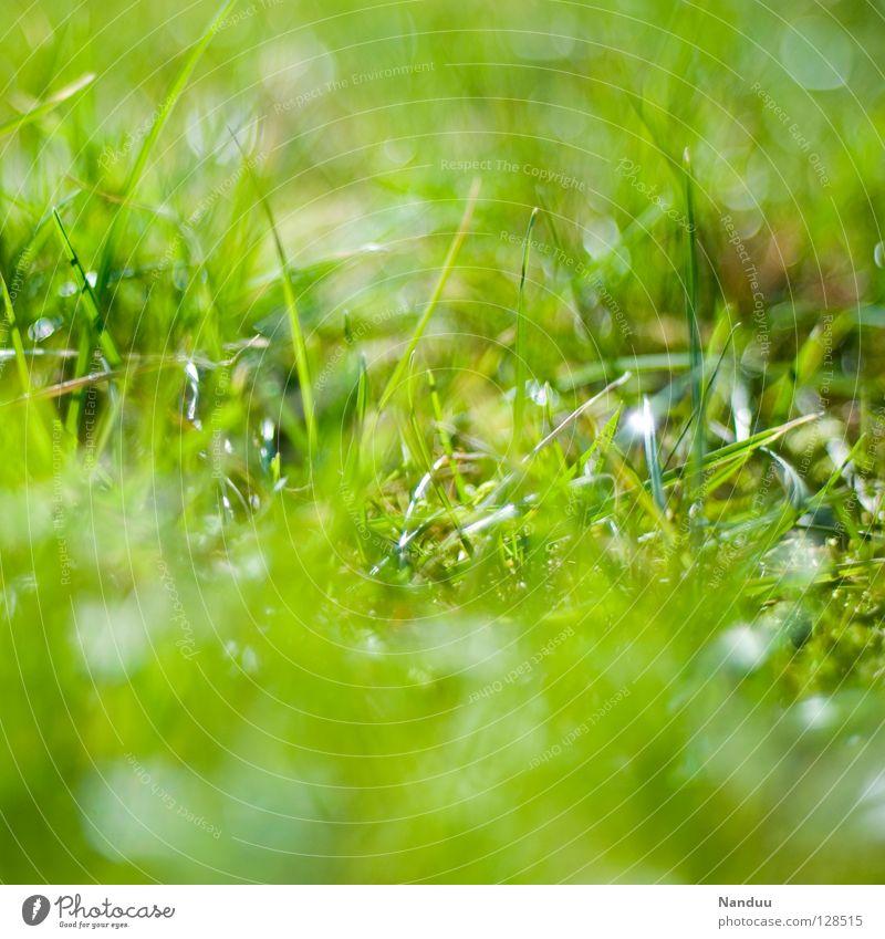 Alle schon gefunden? grün Sommer Leben Erholung Wiese Frühling frisch Wachstum Tiefenschärfe kuschlig Nest gedeihen knackig Osternest Offenblende