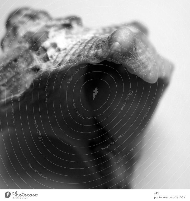 Secret III geheimnisvoll Muschel Meer Strand Sandstrand Haus Schneckenhaus Wohnung Suche finden Spirale Schwung geschwungen Eingang schwarz weiß schön perfekt