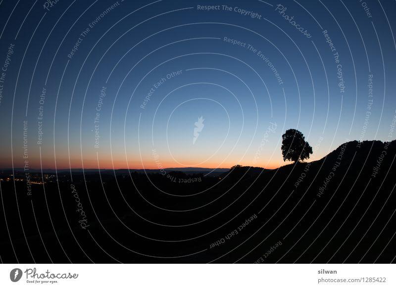 Standalone Baum Himmel Natur blau schön Blume Landschaft ruhig schwarz Wärme außergewöhnlich Horizont orange Zufriedenheit Wachstum stehen ästhetisch