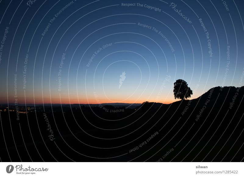 Standalone Baum Natur Landschaft Himmel Wolkenloser Himmel Horizont Sonnenaufgang Sonnenuntergang Schönes Wetter Blume Hügel berühren schlafen stehen Wachstum