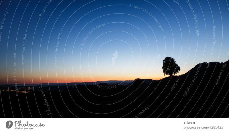 Standalone Baum #2 Natur Landschaft Pflanze Himmel Wolkenloser Himmel Nachthimmel Horizont Sonnenaufgang Sonnenuntergang Sommer Schönes Wetter Feld frieren