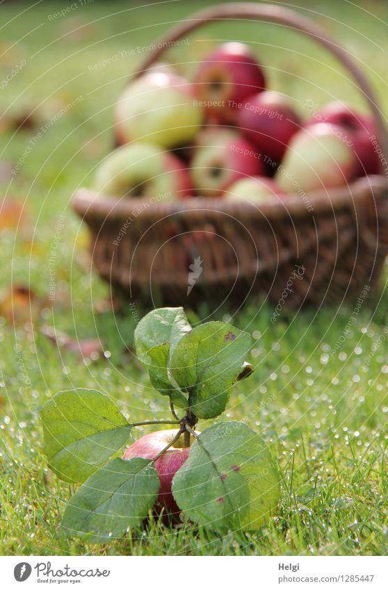 Äppel... Lebensmittel Frucht Apfel Ernährung Bioprodukte Vegetarische Ernährung Korb Umwelt Natur Herbst Schönes Wetter Pflanze Gras Blatt Grünpflanze Garten