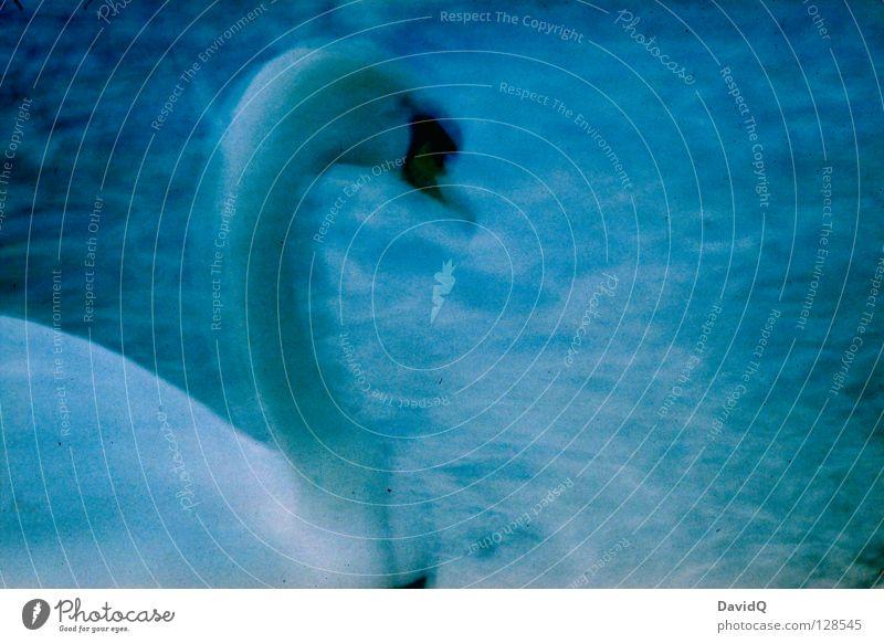 BULB II Schwan Vogel Federvieh See Gewässer träumen Reihe Bewegungsunschärfe Langzeitbelichtung Lomografie Hals Wasser Fluss elegant Bulb happy accident