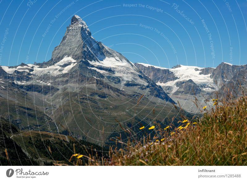 Bergwiese am Matterhorn II Natur Ferien & Urlaub & Reisen blau grün Erholung Landschaft Ferne Berge u. Gebirge Umwelt gelb Blüte Gras natürlich grau braun Felsen