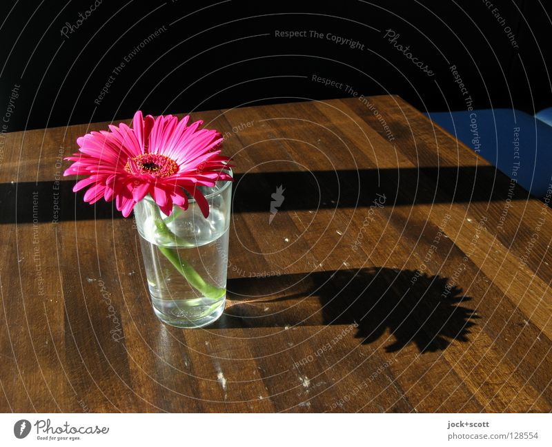 Blümchen (für Anja) Pflanze schön Wasser Blume ruhig Wärme Blüte Holz Glück Zeit rosa Ordnung Dekoration & Verzierung Glas Schönes Wetter Tisch