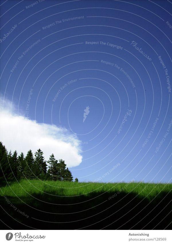 eine Wolke geht im Wald spazieren Himmel Wolken Baum Gras Wiese Hügel blau Schatten Menschenleer Textfreiraum oben Textfreiraum rechts