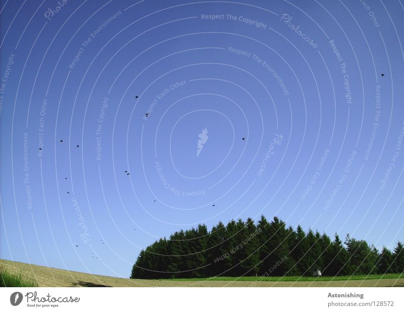 die Vögel Himmel Baum grün blau Wald Wiese Vogel Feld fliegen viele Schwarm Vogelschwarm Vogelflug