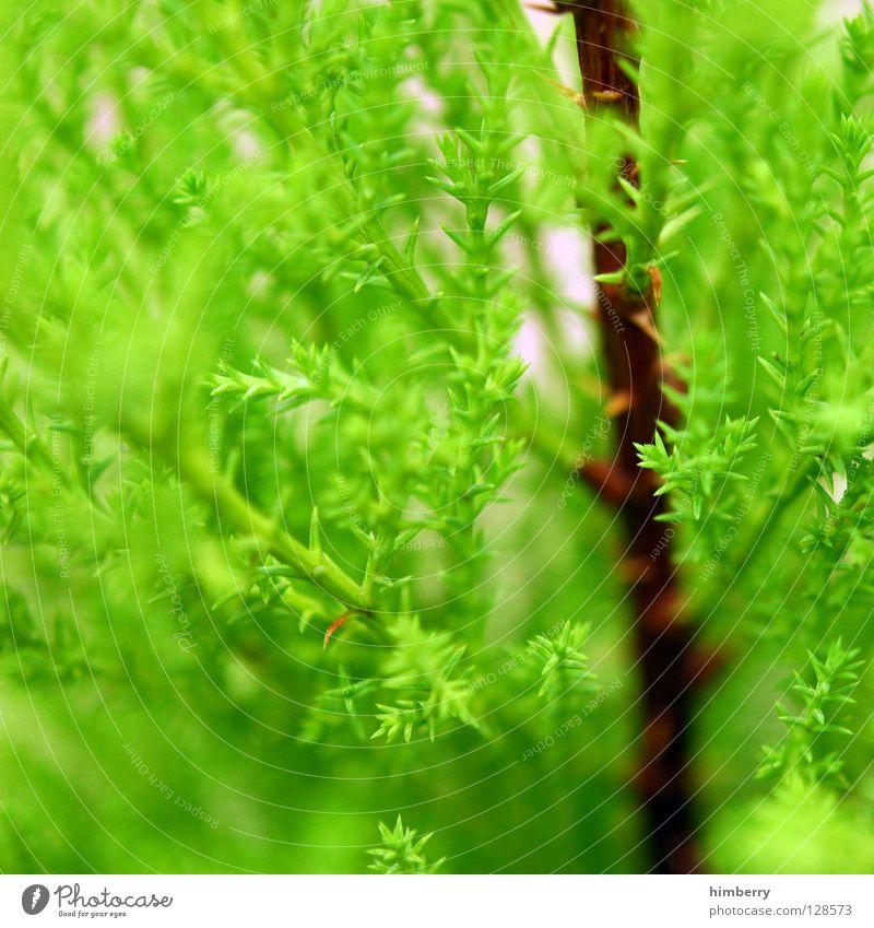 die grüne lunge Natur Baum Umwelt Frühling Luft Linie Park Wildtier Wachstum Tanne Zweig Umweltschutz Forstwirtschaft Nadelbaum Sauerstoff