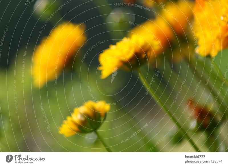 Blümchen gelb grün Unschärfe Blüte Blume Sommer Frühling Gesundheit blau Makrp Focus