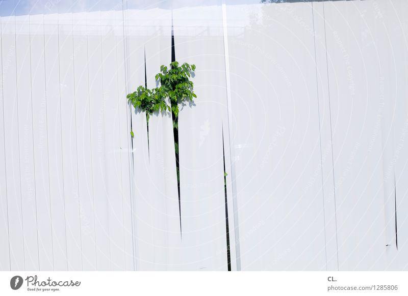 capitol versicherung Pflanze Grünpflanze Fenster Fensterscheibe Sichtschutz Lamellenjalousie Wachstum grün weiß skurril Farbfoto Menschenleer