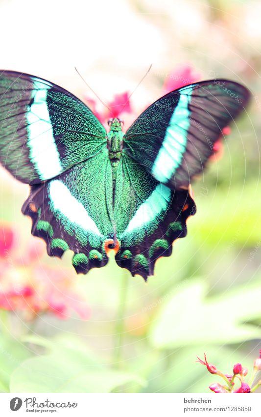 flatterhaft Natur blau Pflanze grün schön Blume rot Blatt Tier Blüte Wiese Garten außergewöhnlich fliegen rosa Park