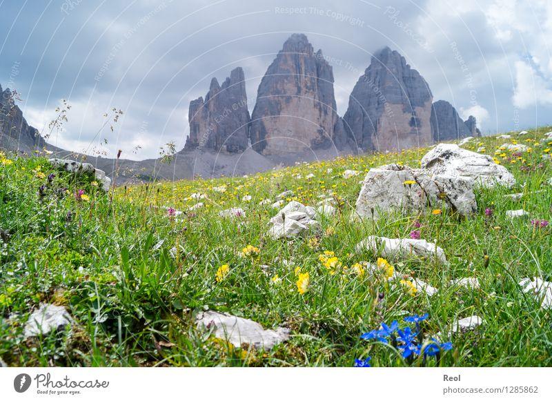 Drei Zinnen Natur Ferien & Urlaub & Reisen grün schön Sommer Landschaft Wolken Ferne Berge u. Gebirge Umwelt Wiese Gras Felsen Tourismus wandern Aussicht