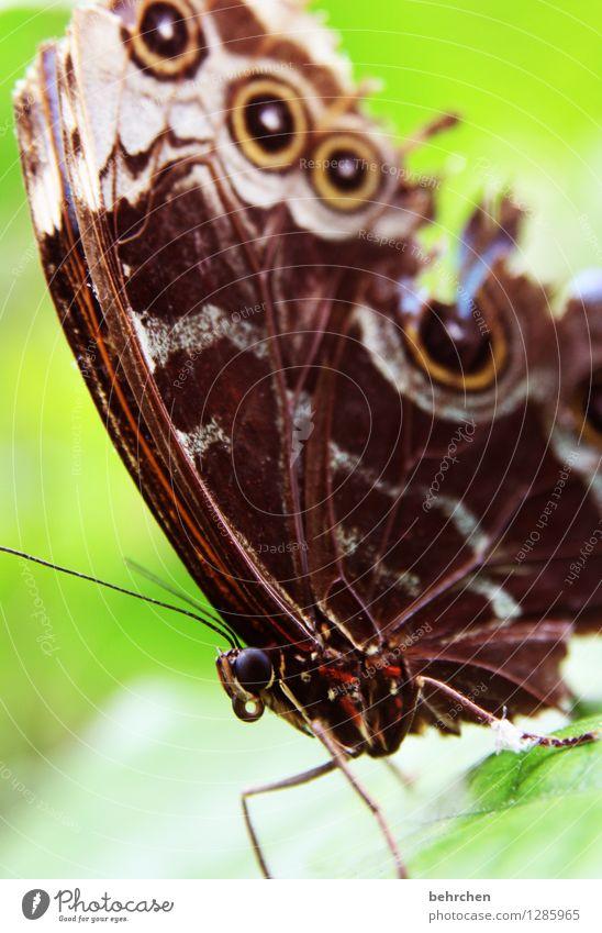 moin Natur Pflanze Tier Frühling Sommer Schönes Wetter Baum Blatt Garten Park Wiese Wildtier Schmetterling Tiergesicht Flügel blauer morphofalter 1 beobachten