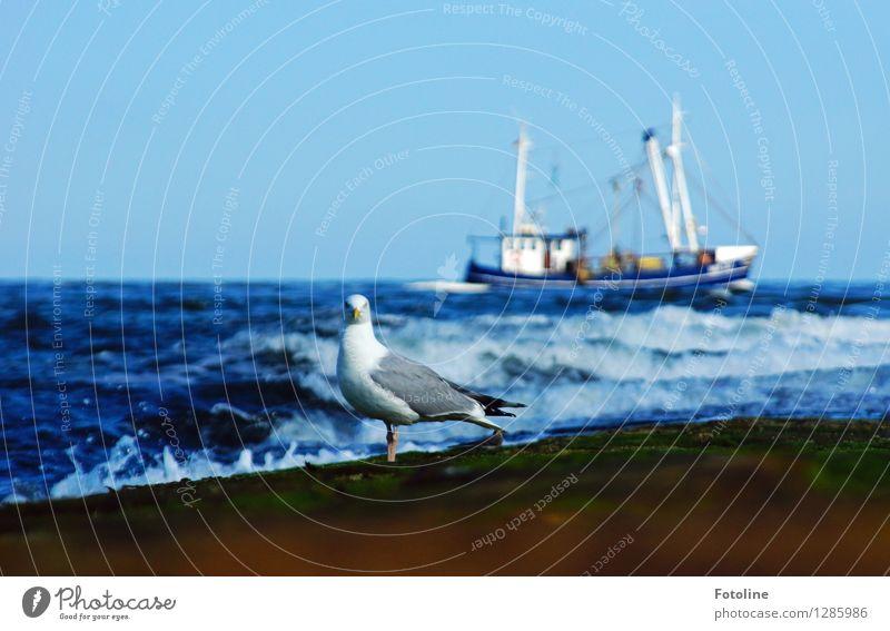 Unter Kontrolle Umwelt Natur Urelemente Wasser Himmel Wolkenloser Himmel Sommer Wellen Küste Nordsee Meer Tier Vogel 1 nah nass blau Wasserfahrzeug Fischerboot