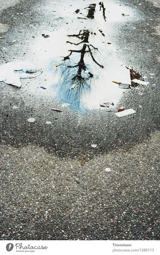 Karl jubelt. Umwelt Himmel Schönes Wetter Straße Wasser ästhetisch blau grau Gefühle dreckig Pfütze Asphalt Reflexion & Spiegelung Baum kahl Farbfoto