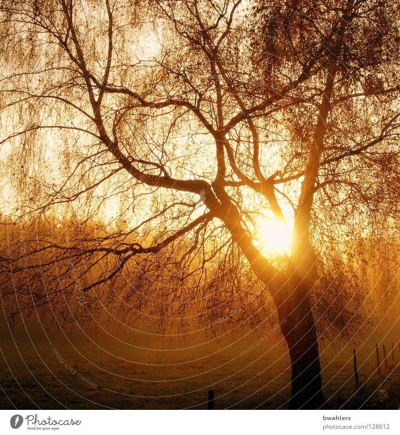 Morgenstimmung 3 Baum Sonne Wald Herbst Wiese Landschaft Stimmung Beleuchtung Nebel Ast