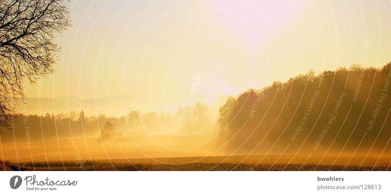 Morgenstimmung 4 Nebel Licht Beleuchtung Baum Wald Wiese Gegenlicht Stimmung Herbst Landschaft Sonne Himmel