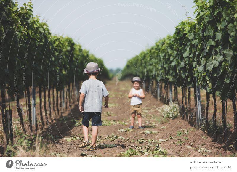 Kinder zwischen Weinreben am Land Mensch Natur Ferien & Urlaub & Reisen Sommer Landschaft Umwelt Leben Junge Spielen Familie & Verwandtschaft Lifestyle
