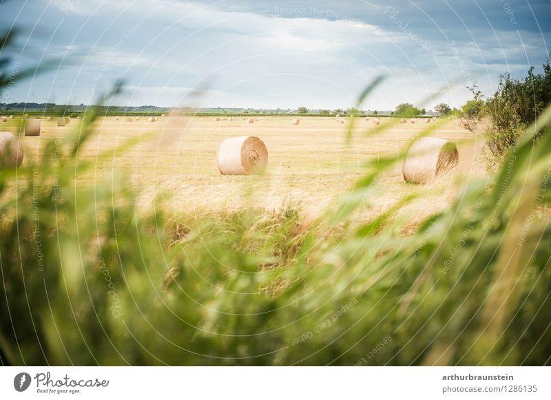 Heuballen Landschaft im Wind Himmel Natur Ferien & Urlaub & Reisen blau Pflanze grün schön Sommer Wolken Umwelt Leben Gras liegen Zufriedenheit Feld