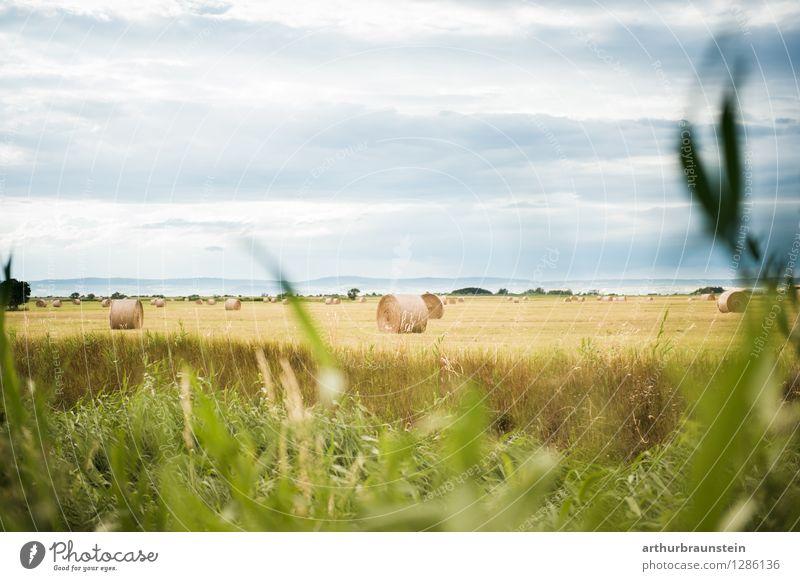Heuballen am Feld Himmel Natur Ferien & Urlaub & Reisen Pflanze schön Sommer Landschaft Wolken Ferne Umwelt Arbeit & Erwerbstätigkeit Freizeit & Hobby Wetter
