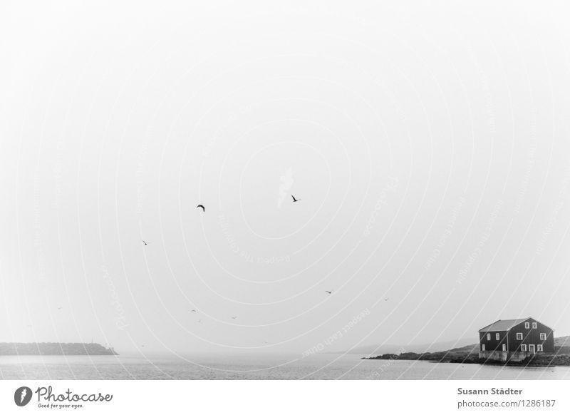 Djúpivogur Meer Einsamkeit Landschaft dunkel Küste Vogel Regen Nebel Hütte Island Dunst Skandinavien schlechtes Wetter Einfamilienhaus Holzhütte Meerstraße