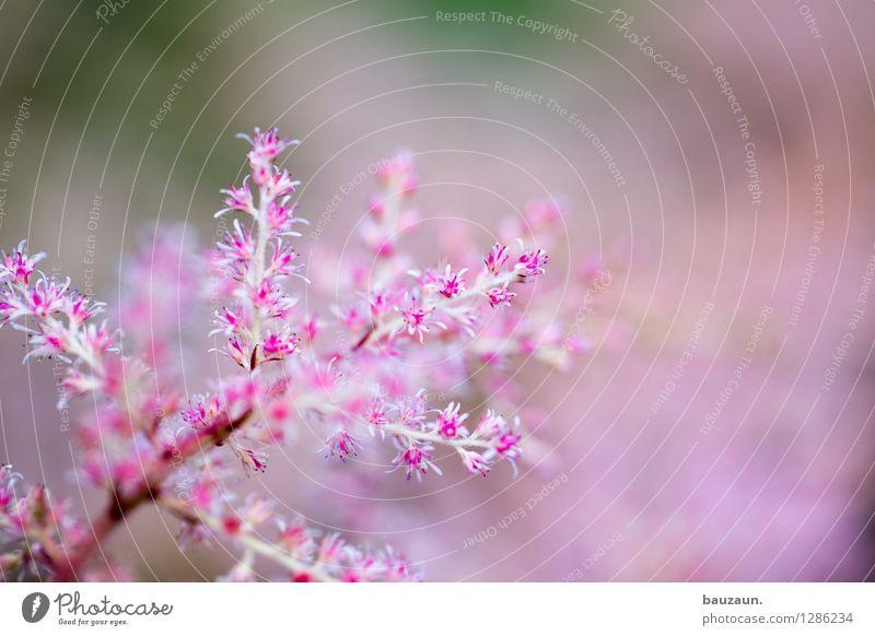 650. Leben harmonisch Wohlgefühl Zufriedenheit Sinnesorgane Erholung ruhig Meditation Ferien & Urlaub & Reisen Ausflug Sommer Garten Natur Pflanze Blume
