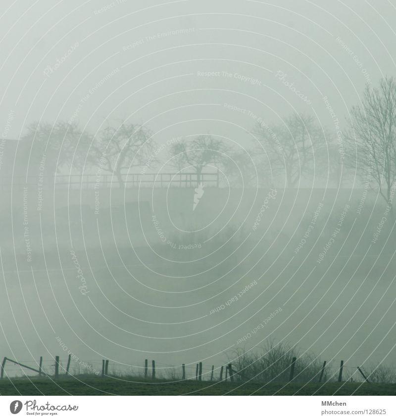 Schemenhaft Himmel blau weiß Baum dunkel Herbst kalt Wiese Wetter Hintergrundbild Nebel trist Sträucher Weide Zaun verstecken