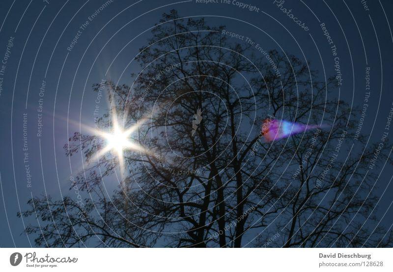 Star in the tree Baum Eiche Buche Blatt Sonnenstrahlen rosa violett Himmel Mittag Nachmittag Sommer Esche Himmelskörper & Weltall Ast Baumstamm Beleuchtung hell