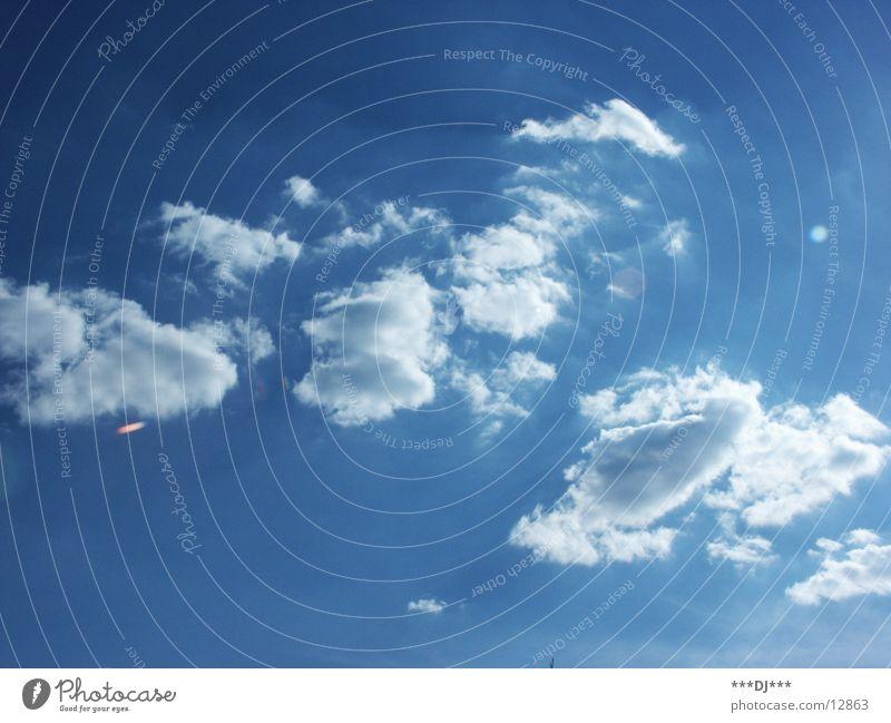 Eine Kuhfresse aus Wolken! Himmel Sonne blau Sommer Wind Show strahlend