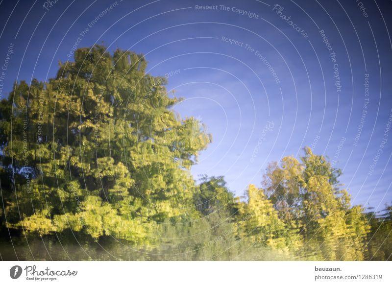 . Himmel Natur Ferien & Urlaub & Reisen Pflanze schön Sommer Wasser Sonne Baum Landschaft ruhig Umwelt See glänzend Park träumen
