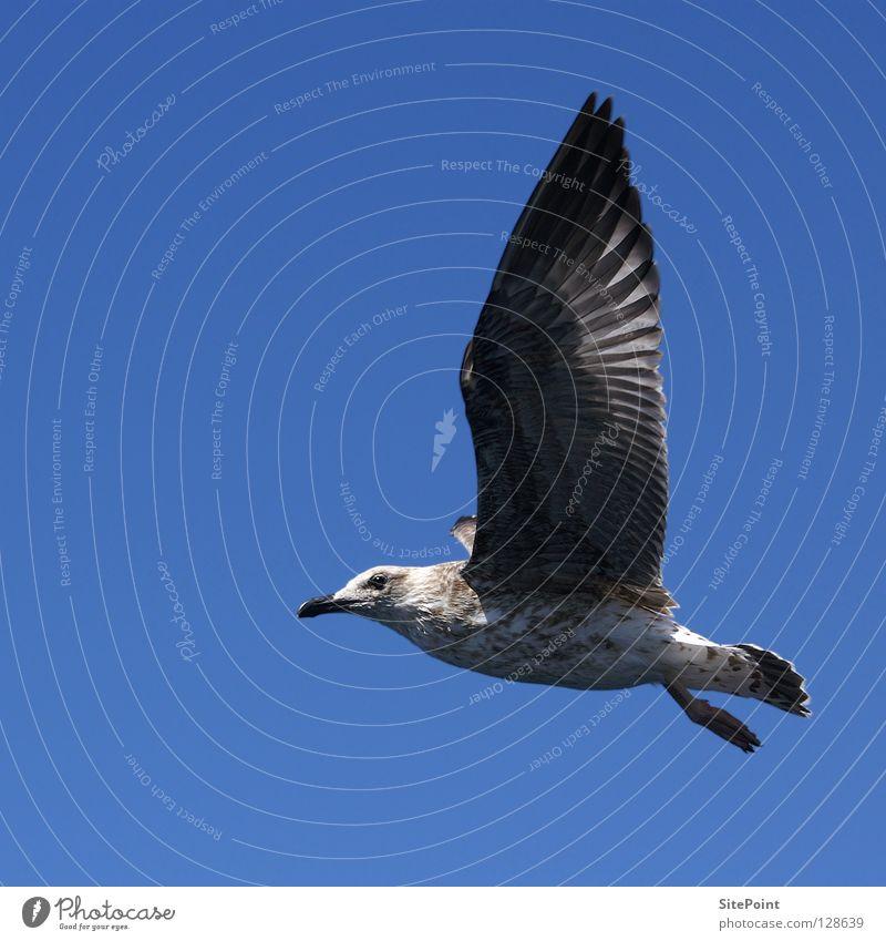 Frei Himmel blau Ferien & Urlaub & Reisen Luft Vogel fliegen frei Möwe Tier
