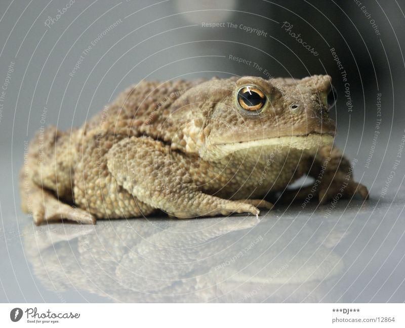 Der Froschköni! Wasser grün Verkehr Amerika Frosch König Ei Kröte Traumprinz Froschlaich Laich