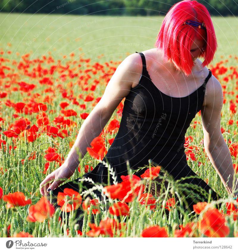 schlag.artig. Feld Sommer heiß Physik Grad Celsius gehen Kleid schwarz rot weiß Strahlung falsch rothaarig Mohnfeld Spaziergang grün gelb Baum Schulter Gras