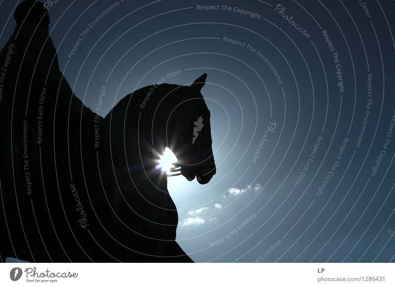 gegen Lifestyle elegant Stil Freizeit & Hobby Reiten Wahrzeichen Tier Pferd Ferne oben Originalität schön Gefühle Stimmung Fröhlichkeit Zufriedenheit