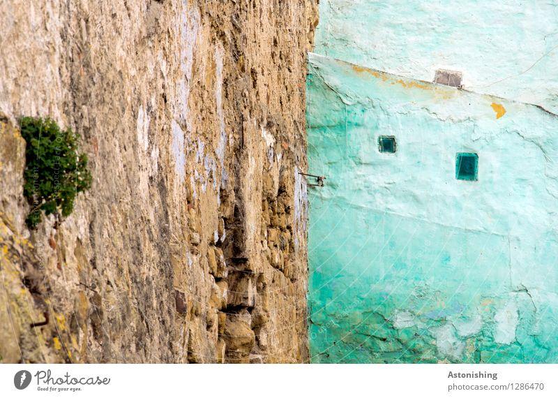 die türkise Wand Pflanze Sträucher Tanger Marokko Afrika Stadt Haus Bauwerk Gebäude Mauer Fassade Fenster blau braun mehrfarbig klein Altstadt Farbfoto