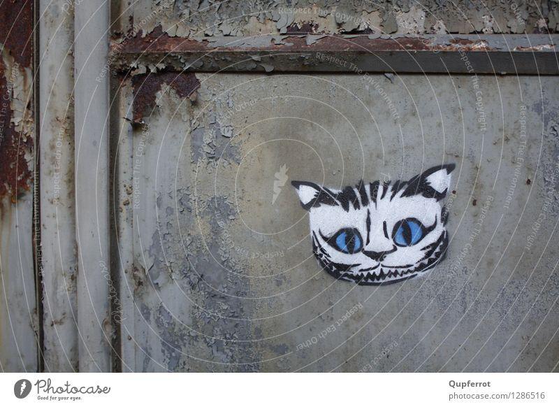 Böses Kätzchen Kunst Graffiti Menschenleer Fabrik Gebäude Tür schwarzhaarig Katze Stahl Rost Aggression bedrohlich dunkel trashig Stadt wild Wut blau weiß böse