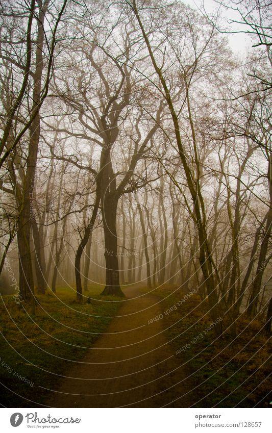 verloren Baum Wald Herbst Wege & Pfade Nebel Ast Geäst Laubwald