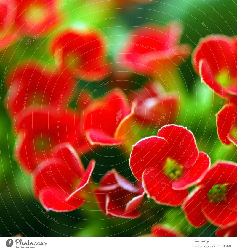 antonia returns Natur Pflanze schön Farbe weiß Sommer Blume gelb Frühling Blüte Hintergrundbild Wachstum frisch Blütenknospen Botanik Blütenblatt