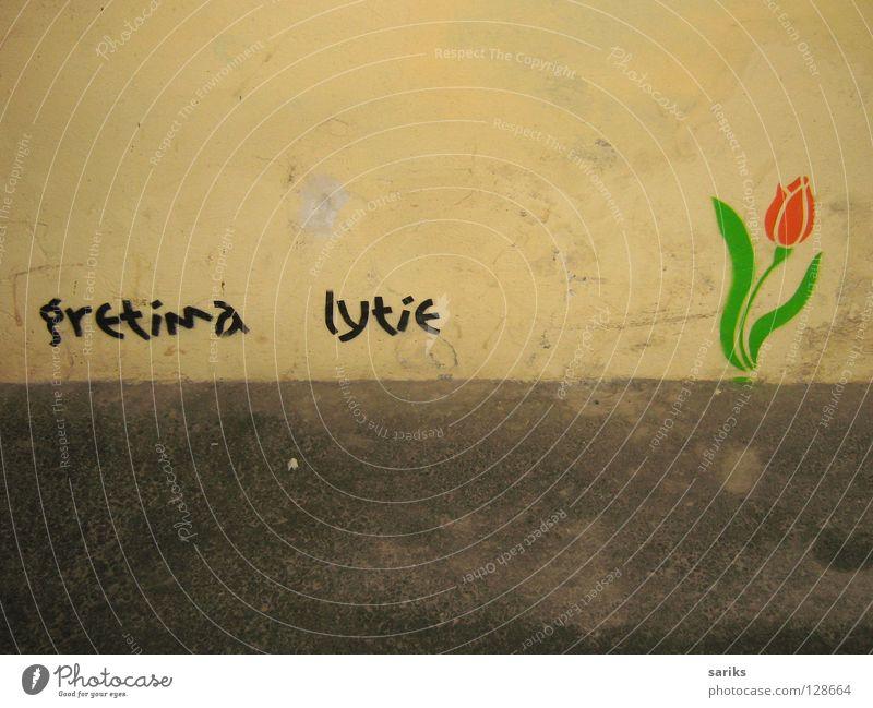nebenan regnet's alt Blume grün rot gelb Wand Frühling grau Regen Graffiti frisch Europa trist Blühend Tulpe Altstadt
