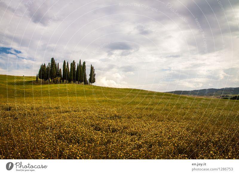 Zypressengärtchen Himmel Natur Ferien & Urlaub & Reisen Pflanze Sommer Baum Einsamkeit Landschaft ruhig Wolken Wald Umwelt gelb Traurigkeit Wiese Horizont