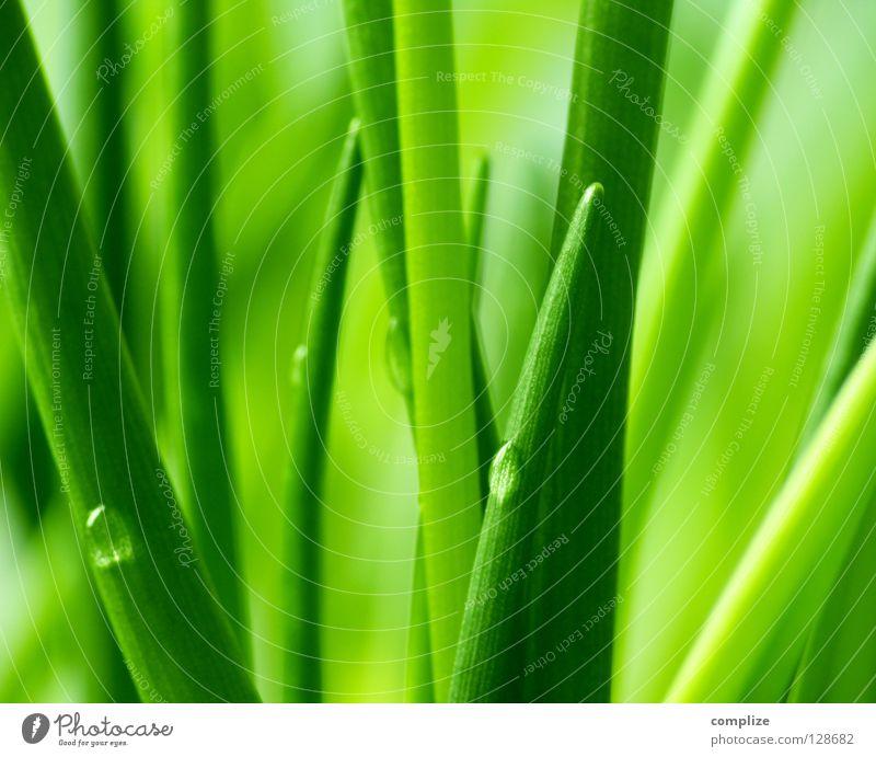 green Menschenleer Textfreiraum oben Textfreiraum unten Textfreiraum Mitte Gemüse Kräuter & Gewürze Bioprodukte Küche Natur Pflanze Wasser Wassertropfen Gras