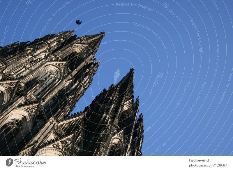 sky is the limit Dom Köln Vogel blau Kölner Dom fliegen Hoffnung Religion & Glaube Gotteshäuser Cathedral Architektur