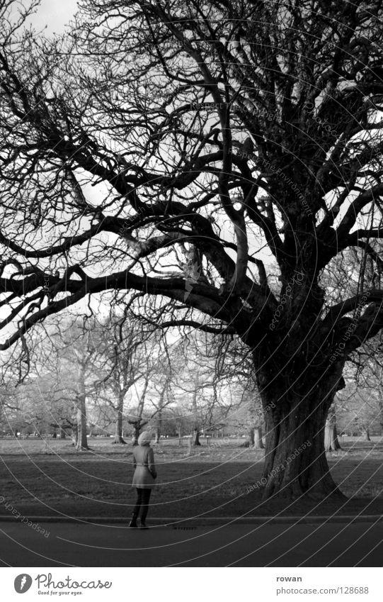 mädchen und baum Frau Natur alt Baum Winter ruhig Leben Park klein Spaziergang Baumstamm Zweig Aufenthalt Geäst staunen