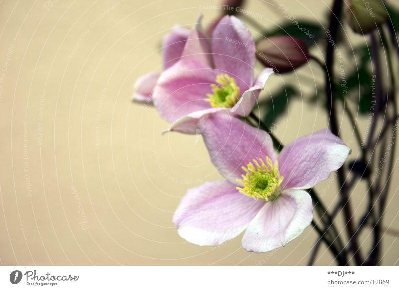 Bienentankstelle Blume Blüte grün Pflanze Sommer Frühling Wachstum Sträucher Blühend Natur